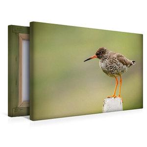 Premium Textil-Leinwand 45 cm x 30 cm quer Rotschenkel (Tringa t