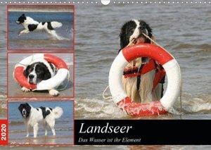 Landseer - Das Wasser ist ihr Element (Wandkalender 2020 DIN A3