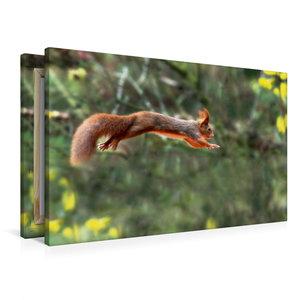 Premium Textil-Leinwand 90 cm x 60 cm quer Eichhörnchen springt