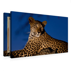 Premium Textil-Leinwand 75 cm x 50 cm quer Leopard auf seinem Li