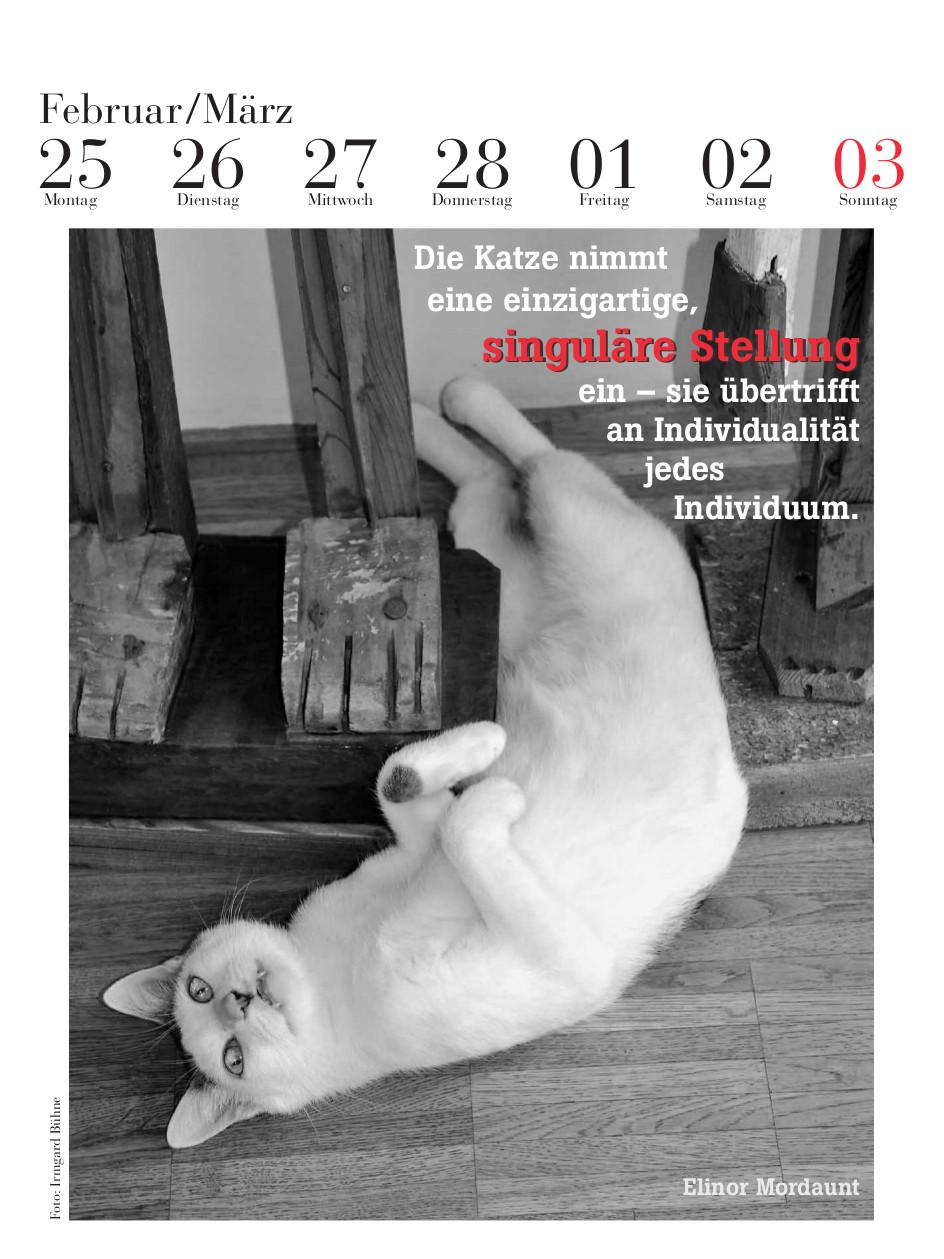 Der literarische Katzenkalender 2019 - zum Schließen ins Bild klicken
