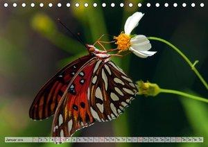Schmetterlinge - zarte Geschöpfe der Natur (Tischkalender 2019 D