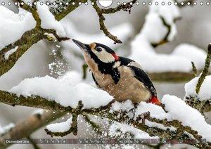 NATUR PUR Vertraute Singvögel (Wandkalender 2019 DIN A4 quer)
