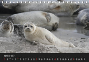 Kegelrobben und Seehunde (Tischkalender 2019 DIN A5 quer)