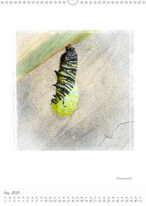 Monarchschmetterlinge (Wandkalender 2020 DIN A3 hoch)
