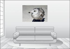 Premium Textil-Leinwand 120 cm x 80 cm quer Möwen Kind