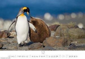 Pinguine S 2020