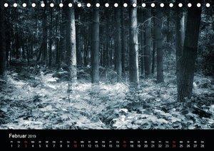Mystische Wälder (Tischkalender 2019 DIN A5 quer)