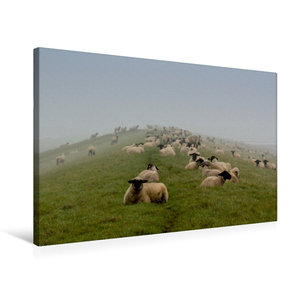 Premium Textil-Leinwand 75 cm x 50 cm quer Schafsherde