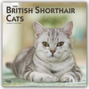British Shorthair Cats - Britische Kurzhaarkatzen 2020 - 16-Mona
