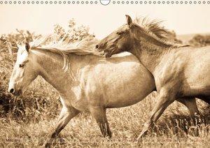Tanz der wilden Pferde in der Camargue