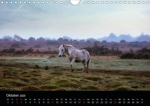 New Forest - England