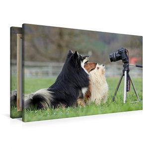 Premium Textil-Leinwand 90 cm x 60 cm quer Vor der Kamera posier