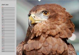 Adler und Greife. Könige des Himmels