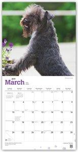 Lakeland Terriers 2019 - 18-Monatskalender mit freier DogDays-Ap