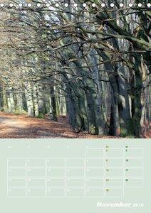 Bolmke - Naturschutzgebiet Dortmund (Tischkalender 2019 DIN A5 h