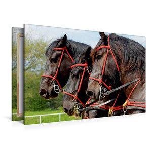 Premium Textil-Leinwand 120 cm x 80 cm quer Percherons der Bergq
