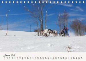 Schlittenhundesport (Tischkalender 2019 DIN A5 quer)