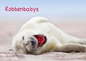 Robbenbabys (Posterbuch DIN A2 quer)