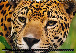 Big Cats ? Faces of the most beautiful predators