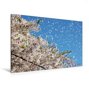 Premium Textil-Leinwand 120 cm x 80 cm quer Wind trägt Kirschblü