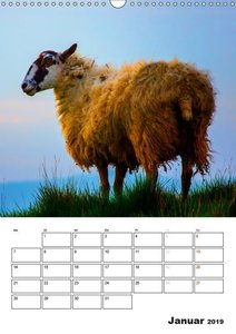 Schafe und ihre Lämmer / Planer (Wandkalender 2019 DIN A3 hoch)