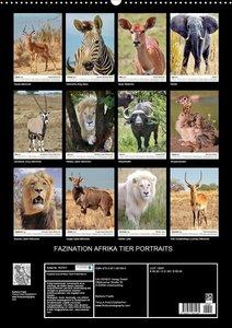 FAZINATION AFRIKA TIER PORTRAITS