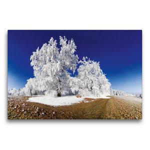 Premium Textil-Leinwand 75 cm x 50 cm quer Baum im Raureif bei P