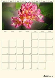 Rhododendren in der Parklandschaft Ammerland / Planer