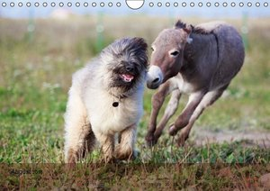 Little Donkey with Friends (Wall Calendar 2015 DIN A4 Landscape)