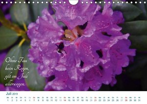 Bauernregeln 2019. Wetterweisheiten in Bildern (Wandkalender 201