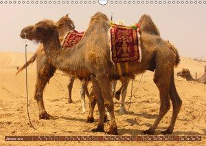 Kamele - Dromedar & Trampeltier (Wandkalender 2019 DIN A3 quer)