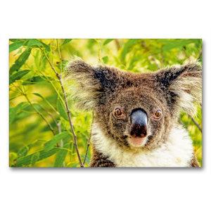 Premium Textil-Leinwand 90 cm x 60 cm quer Alles meins - ein Koa
