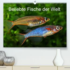 Beliebte Fische der Welt(Premium, hochwertiger DIN A2 Wandkalend