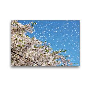 Premium Textil-Leinwand 45 cm x 30 cm quer Wind trägt Kirschblüt