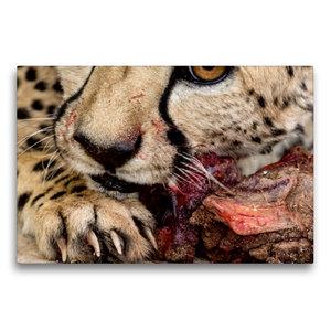 Premium Textil-Leinwand 75 cm x 50 cm quer Wildes Namibia: Gepar