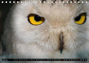 Eulen. Nachtaktiv, lautlos, schön (Tischkalender 2019 DIN A5 que