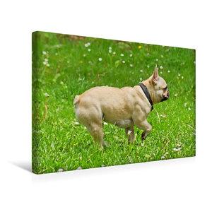 Premium Textil-Leinwand 45 cm x 30 cm quer Französische Bulldogg