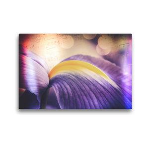 Premium Textil-Leinwand 45 cm x 30 cm quer Iris-Blüte, blau