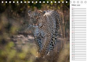 Emotionale Momente: Leoparden (Tischkalender 2020 DIN A5 quer)