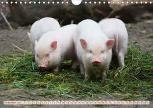 Tierische Schweinerei