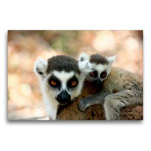 Premium Textil-Leinwand 75 cm x 50 cm quer Katta Lemur mit Baby