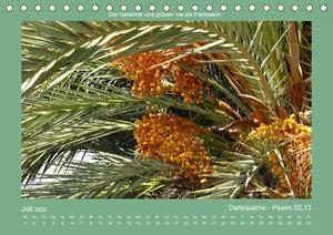 Pflanzen der Bibel (Tischkalender 2020 DIN A5 quer)