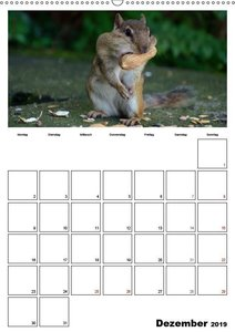 Streifenhörnchen - neugierige Nager (Wandkalender 2019 DIN A2 ho