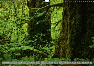 Wälderweit - Unterwegs im Wald I