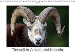 Tierwelt in Alaska und Kanada