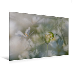 Premium Textil-Leinwand 120 cm x 80 cm quer Die Zuneigung