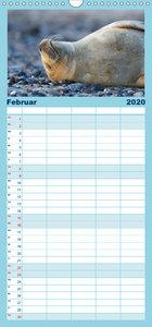 Robben - Lustige Bewohner Helgolands - Familienplaner hoch