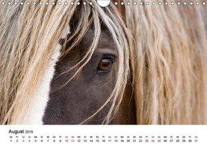 Pferde - im Galopp durch\'s Jahr 2019 (Wandkalender 2019 DIN A4