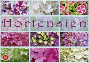 Hortensien / Geburtstagskalender